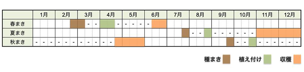キャベツの栽培時期・栽培スケジュール