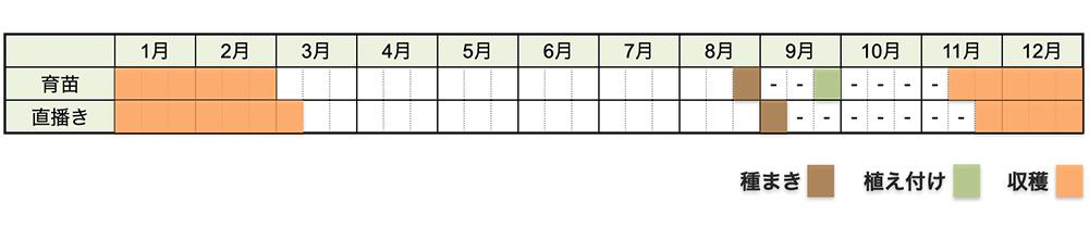 ハクサイ(白菜)の栽培時期・栽培スケジュール
