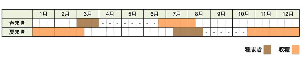 ニンジン(人参)の栽培時期・栽培スケジュール