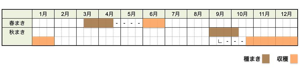 シュンギク(春菊)の栽培時期・栽培スケジュール