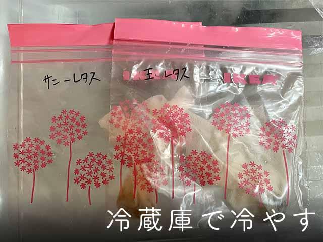 レタスの種を休眠打破(冷蔵庫で冷やす)